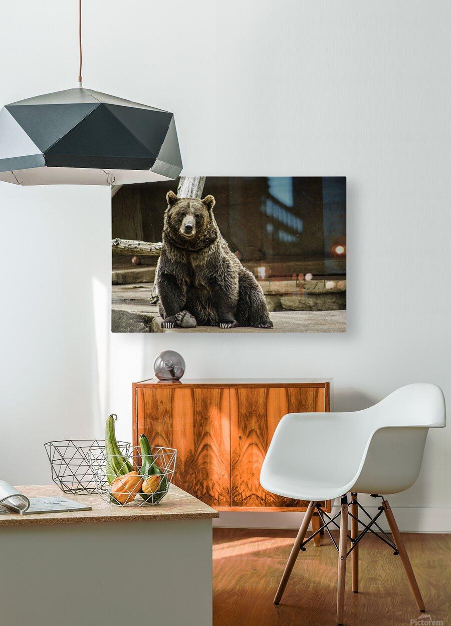 Greetings  Brown Bear   HD Metal print with Floating Frame on Back