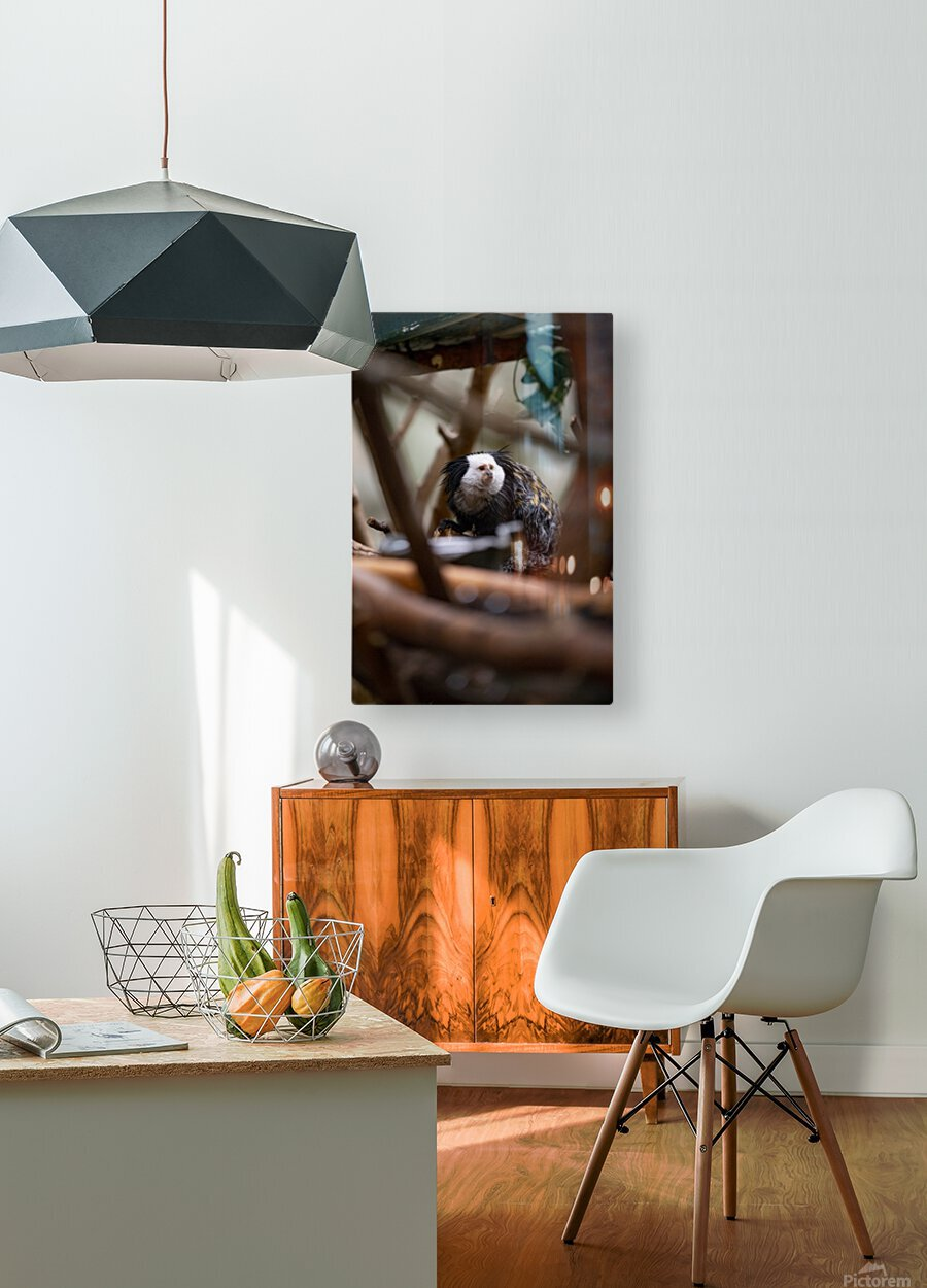 Through The Trees  Marmoset   HD Metal print with Floating Frame on Back