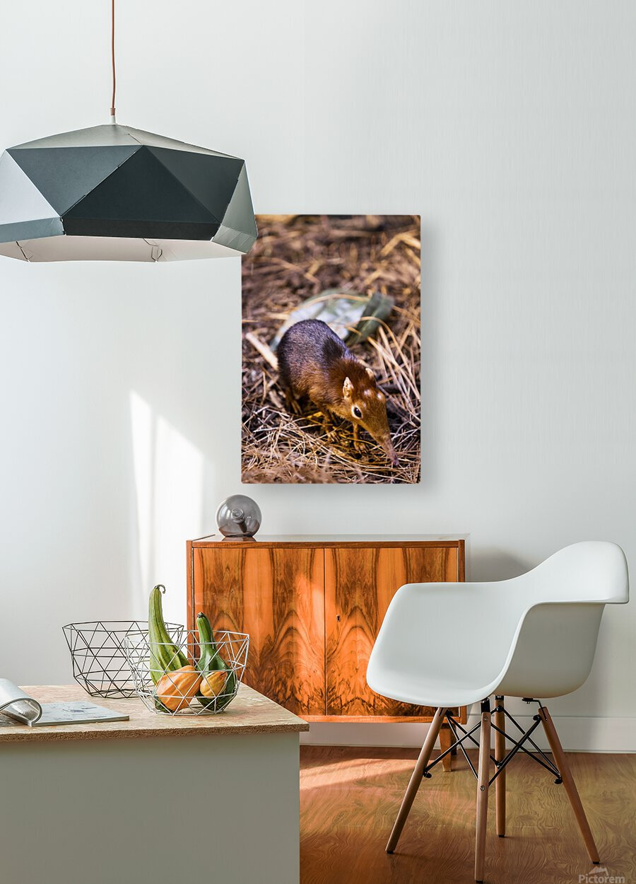 Small Elephant Mouse  HD Metal print with Floating Frame on Back