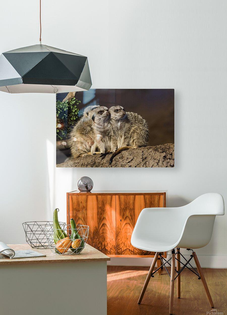 Take Watch  Meerkats   HD Metal print with Floating Frame on Back