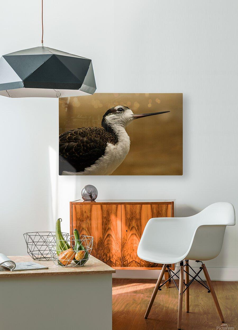 Shine Little Bird  Stilt   HD Metal print with Floating Frame on Back