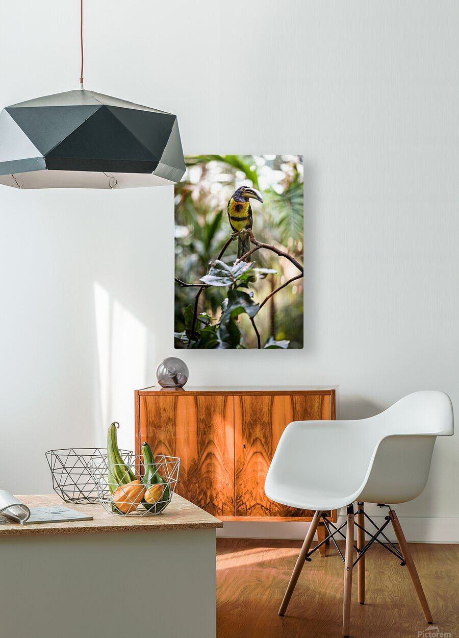 Standing Out  Tucan   HD Metal print with Floating Frame on Back