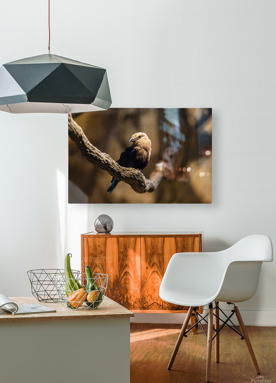 Perfect Pose  Bird   HD Metal print with Floating Frame on Back