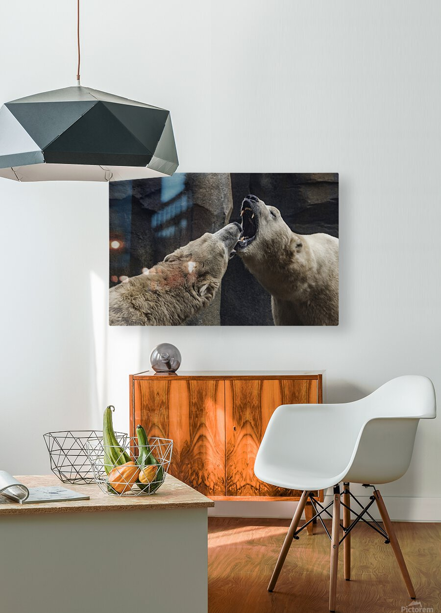 The Fight   Polar Bears   HD Metal print with Floating Frame on Back