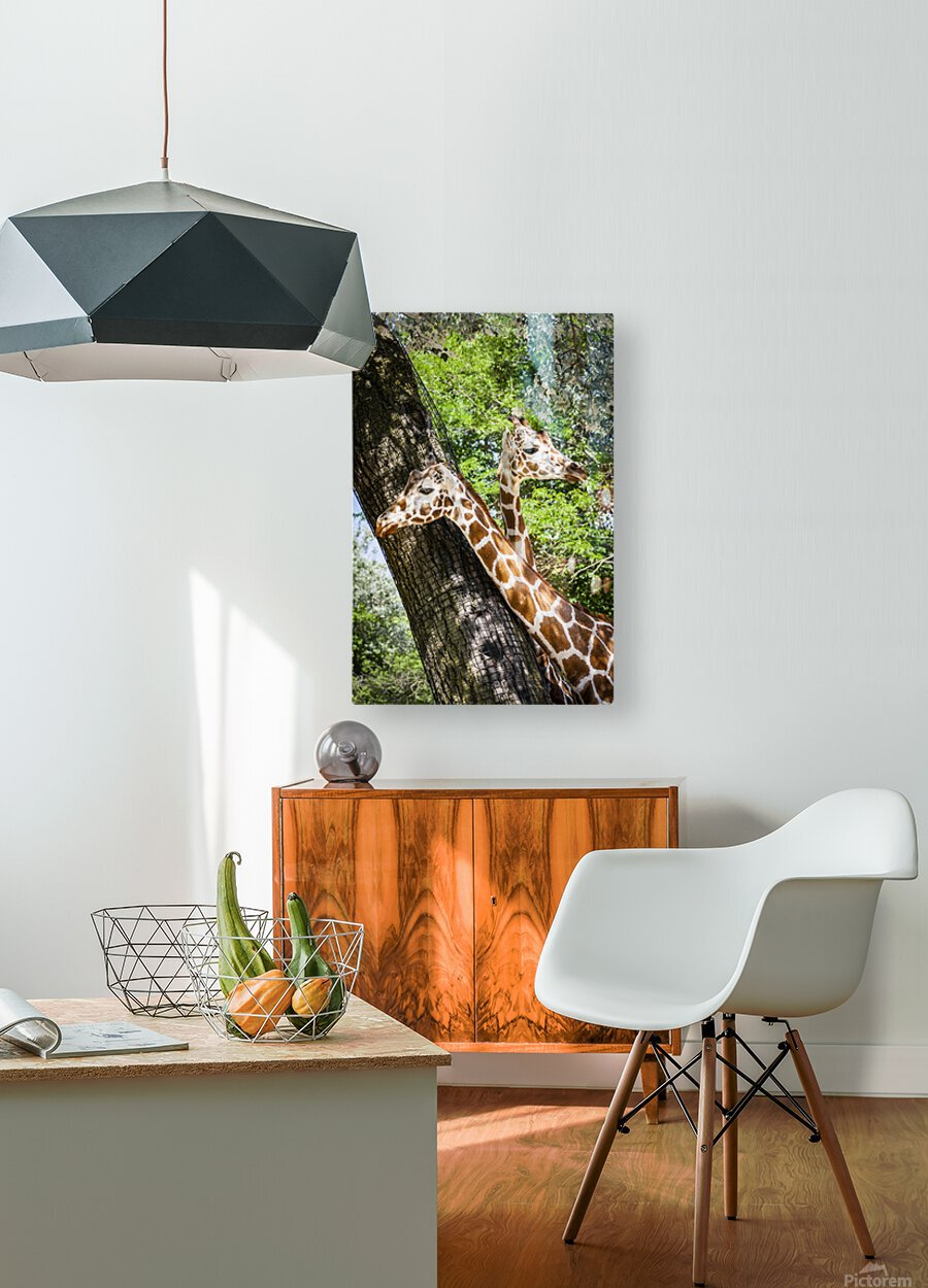 Spots Under Shadows  Giraffes   HD Metal print with Floating Frame on Back