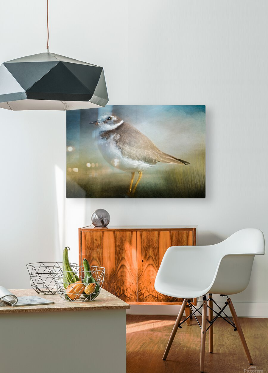 Semipalmated Plover  HD Metal print with Floating Frame on Back