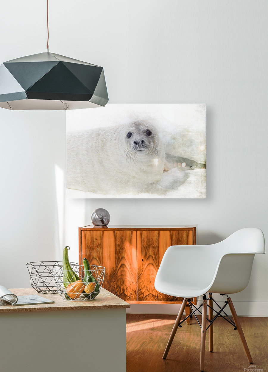 Whiskers  HD Metal print with Floating Frame on Back