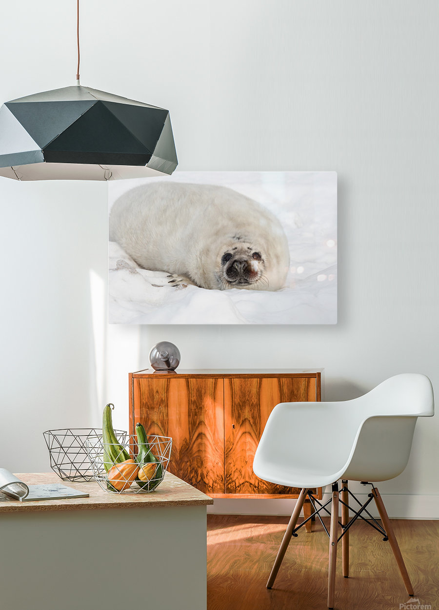 Hello  HD Metal print with Floating Frame on Back