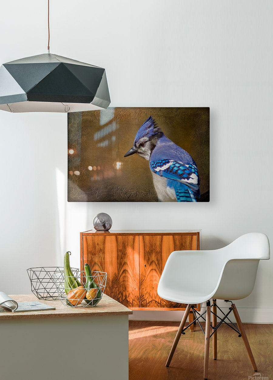 Blue Jay with texture  HD Metal print with Floating Frame on Back