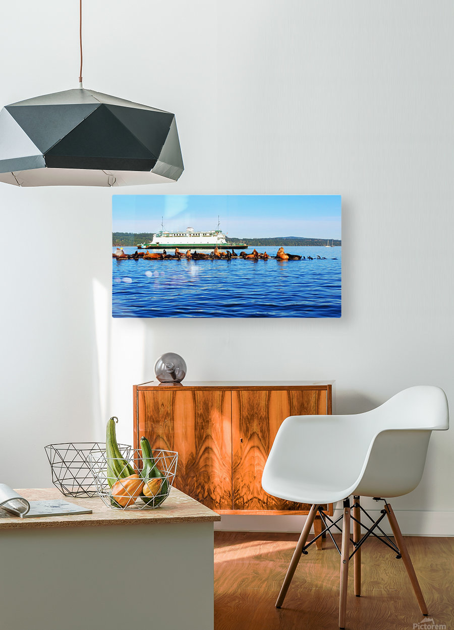 Sea Lions Hanging Out  HD Metal print with Floating Frame on Back