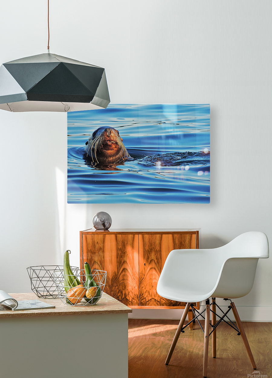 Serendipity  HD Metal print with Floating Frame on Back
