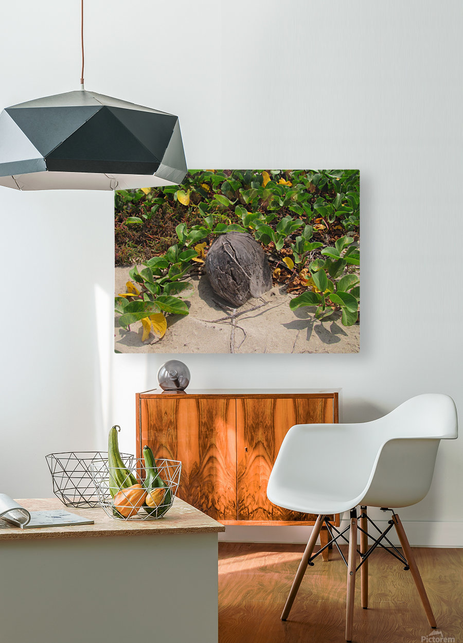 Coconut in the Sand  HD Metal print with Floating Frame on Back