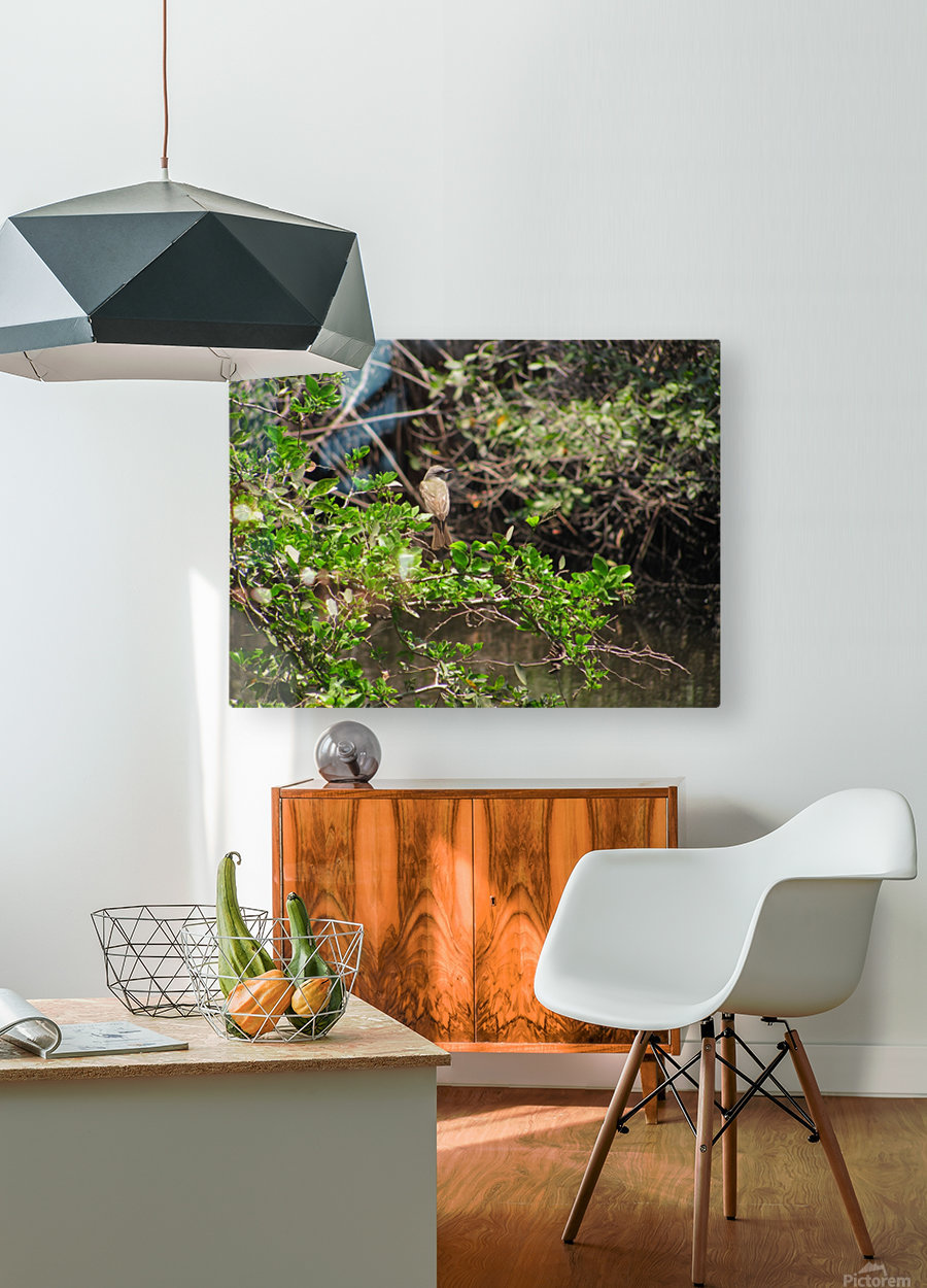 Tropical Bird in Tree  HD Metal print with Floating Frame on Back