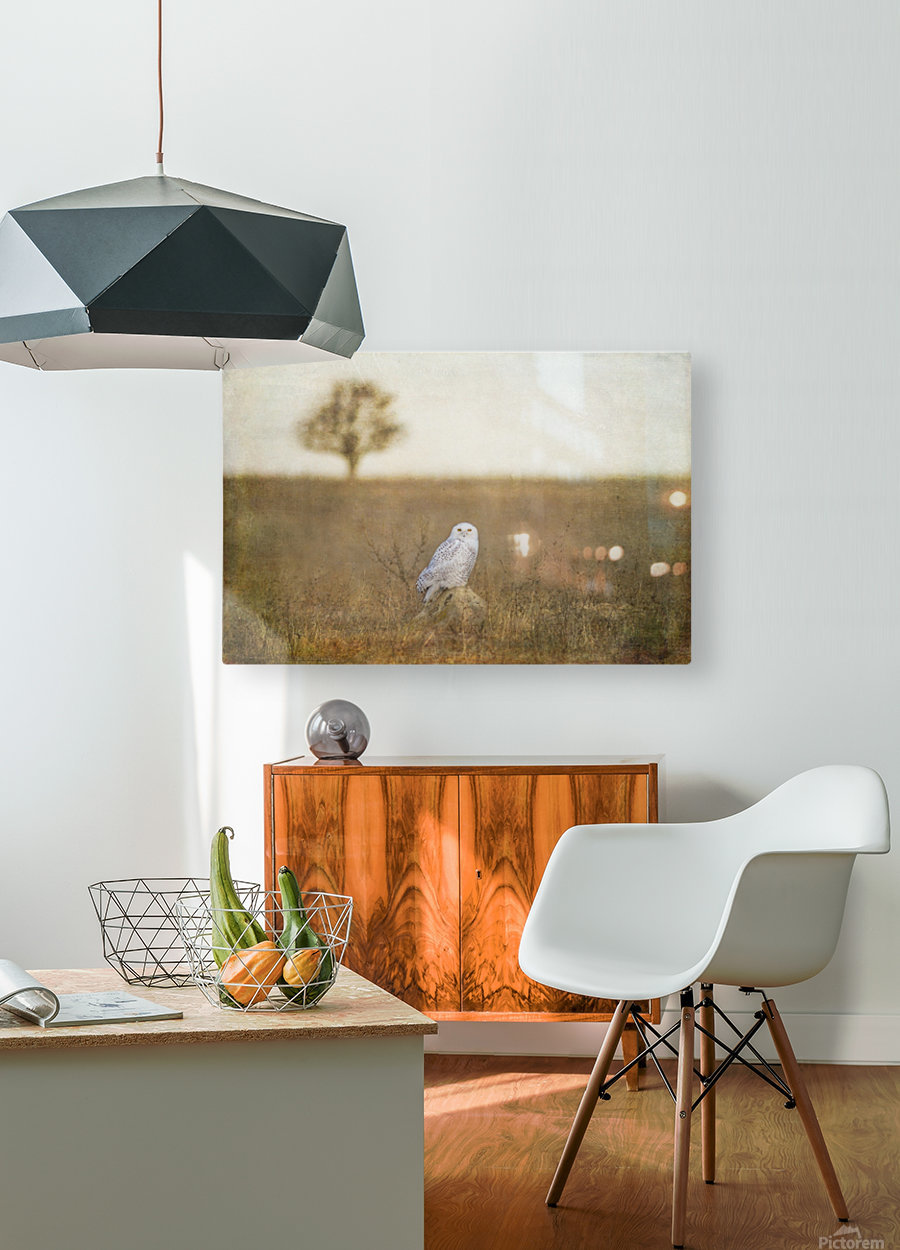 Snowy on a Rock  HD Metal print with Floating Frame on Back