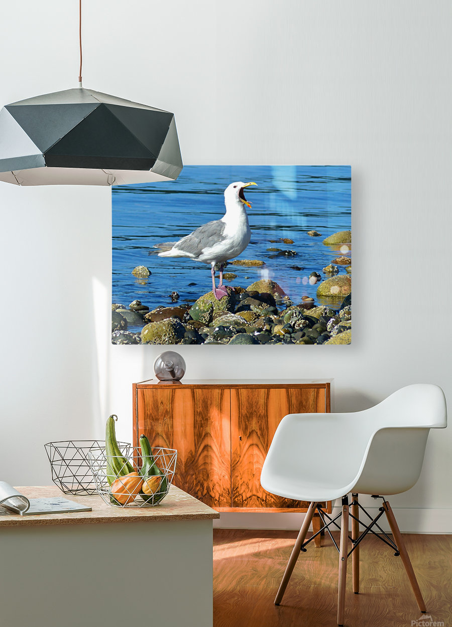 Yawning Gull  HD Metal print with Floating Frame on Back