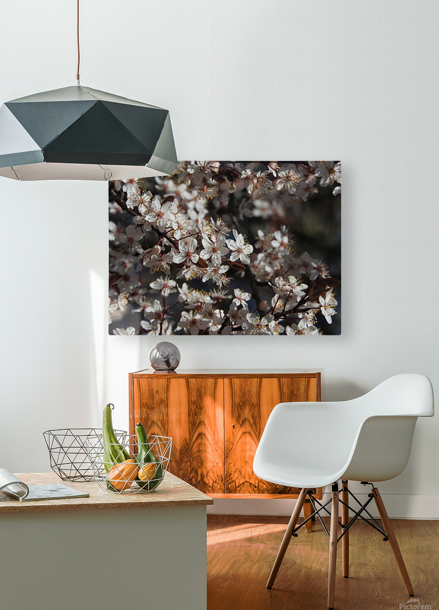 Lovely Blossoms  HD Metal print with Floating Frame on Back