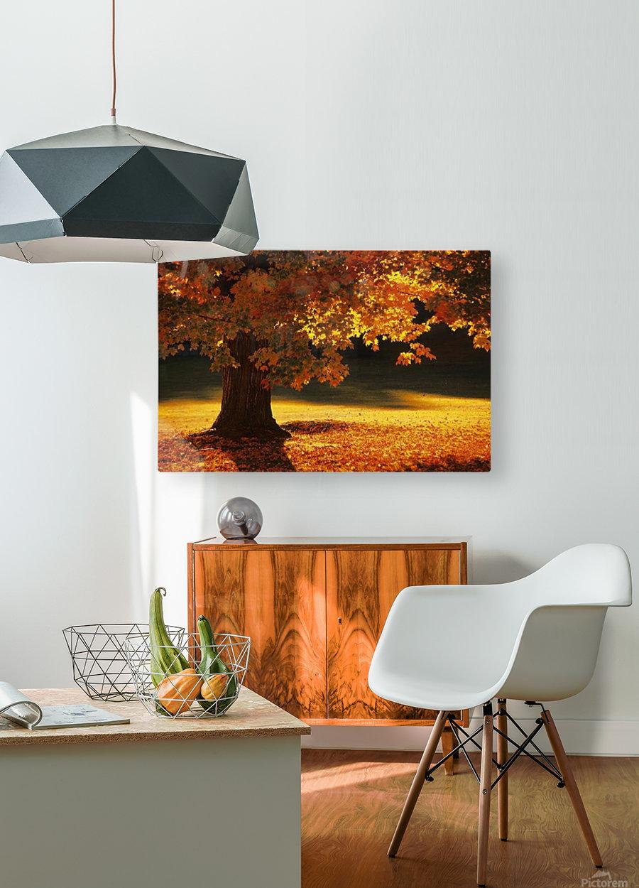 landscape_2_0386  HD Metal print with Floating Frame on Back