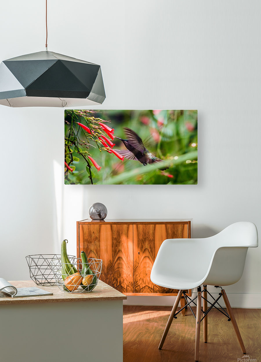 Hummingbird  HD Metal print with Floating Frame on Back