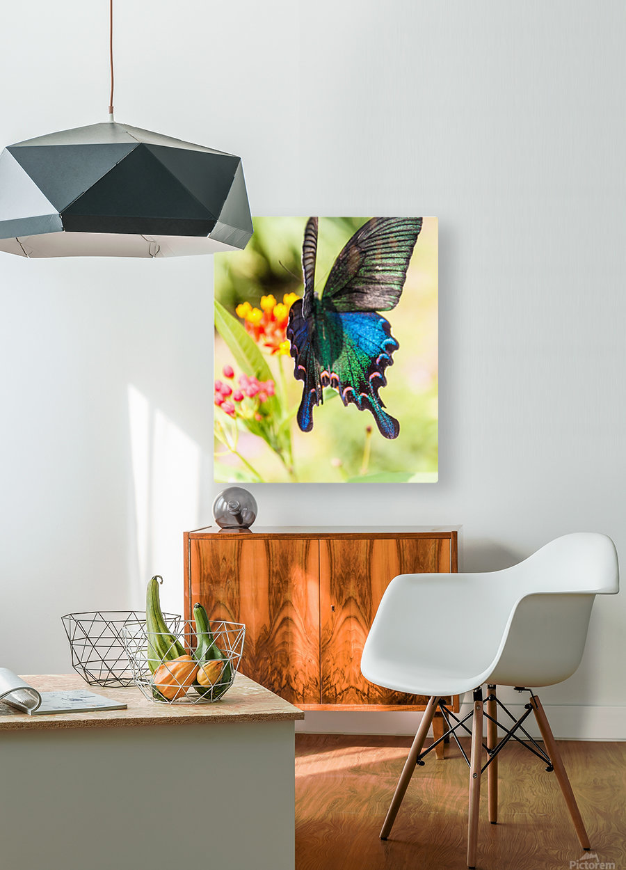 Butterfly not in the sky  HD Metal print with Floating Frame on Back