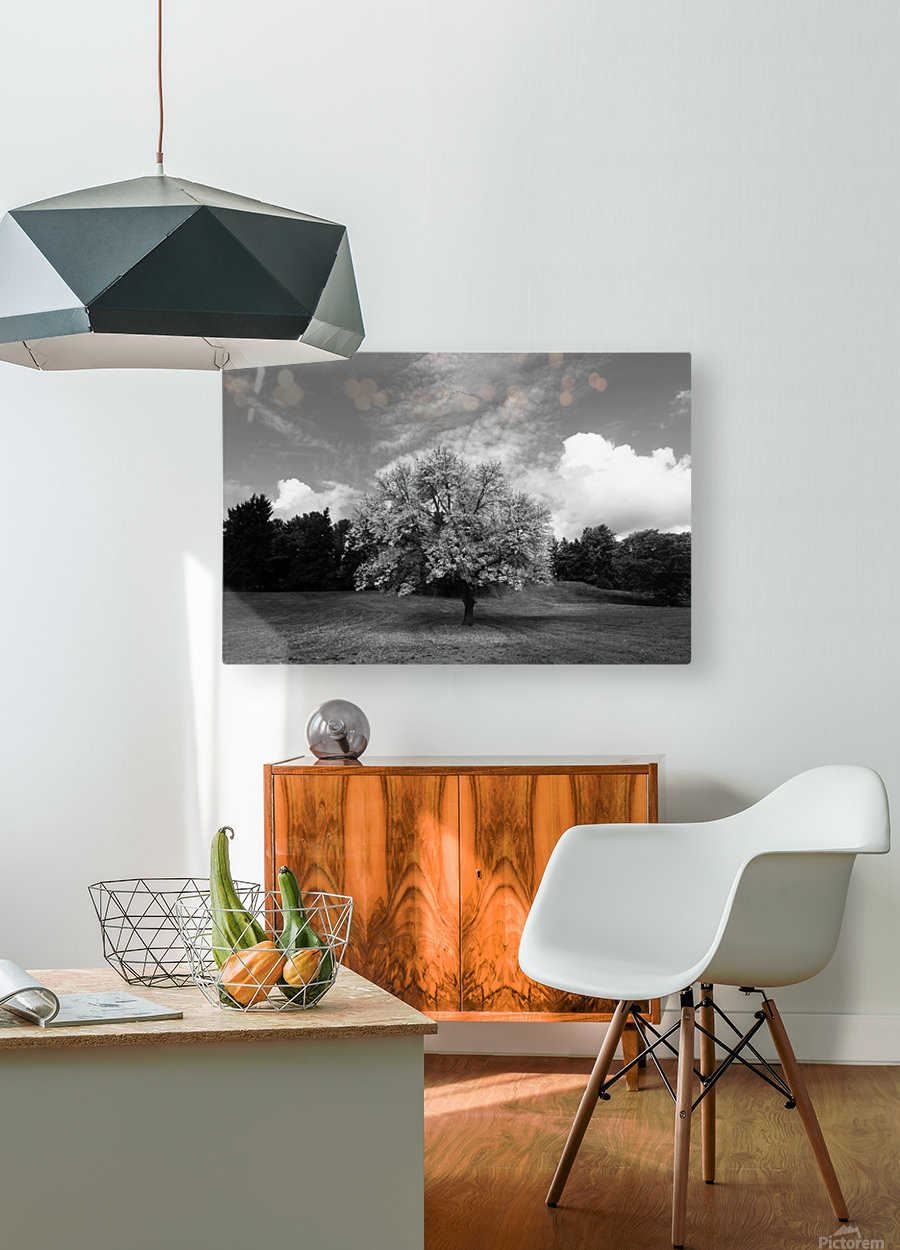 Autumn Glow  HD Metal print with Floating Frame on Back
