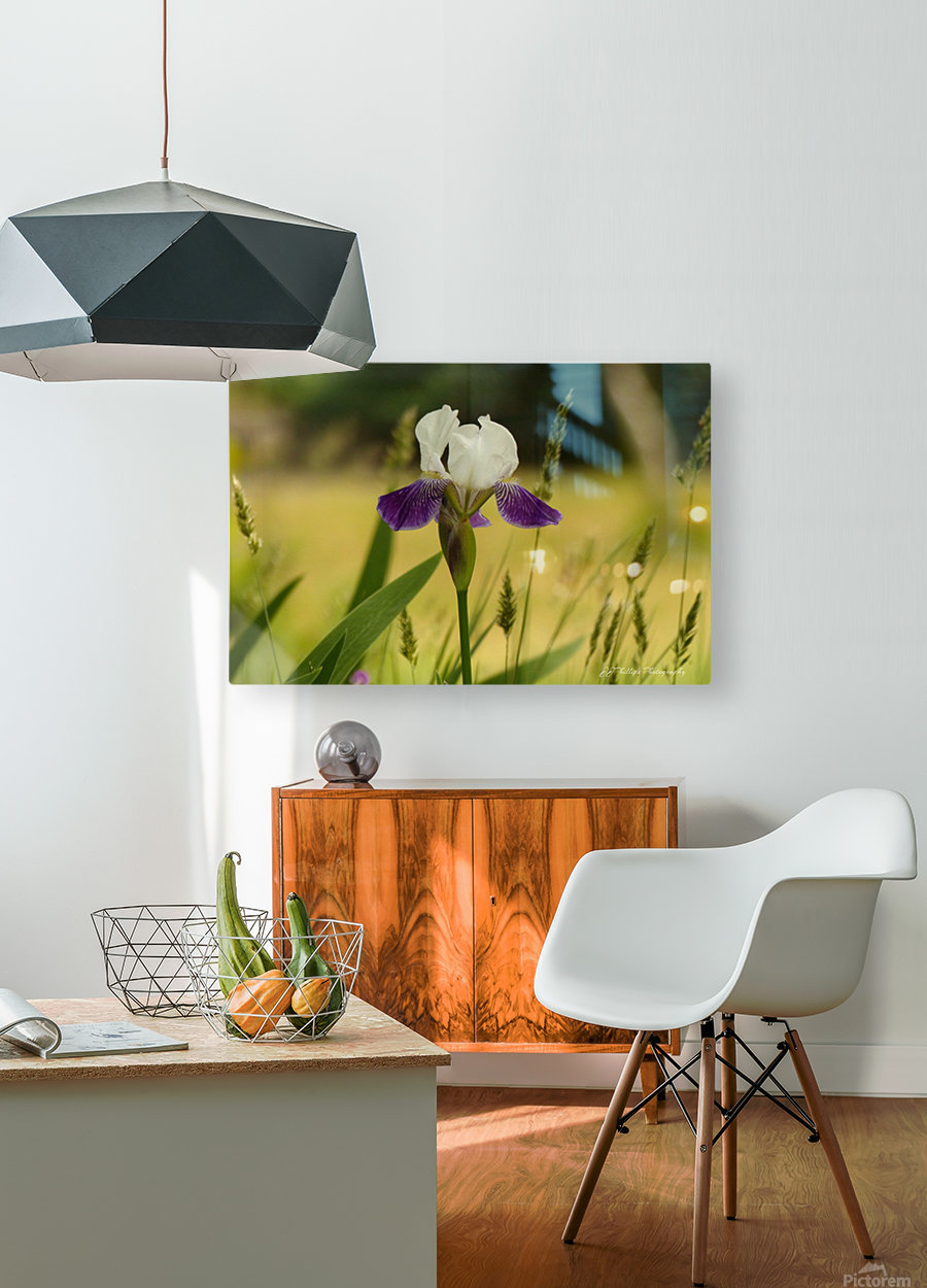 Iris Doll  HD Metal print with Floating Frame on Back