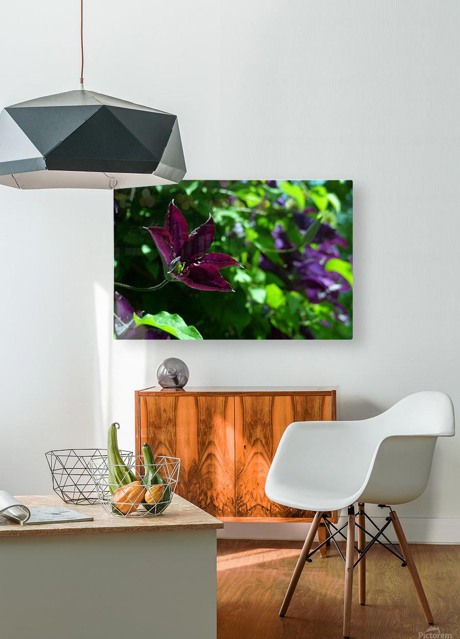 Divine Vine  HD Metal print with Floating Frame on Back