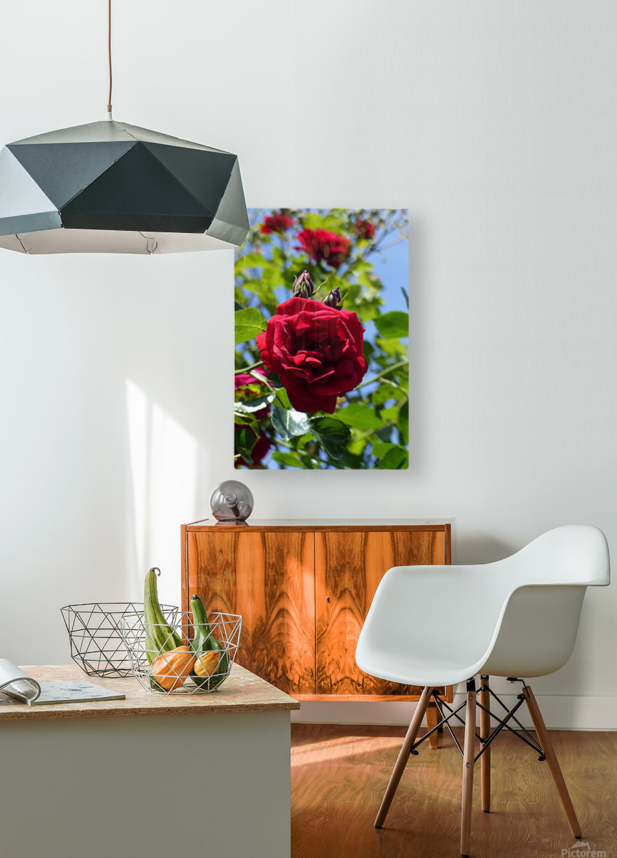 Red, White and Blue  HD Metal print with Floating Frame on Back