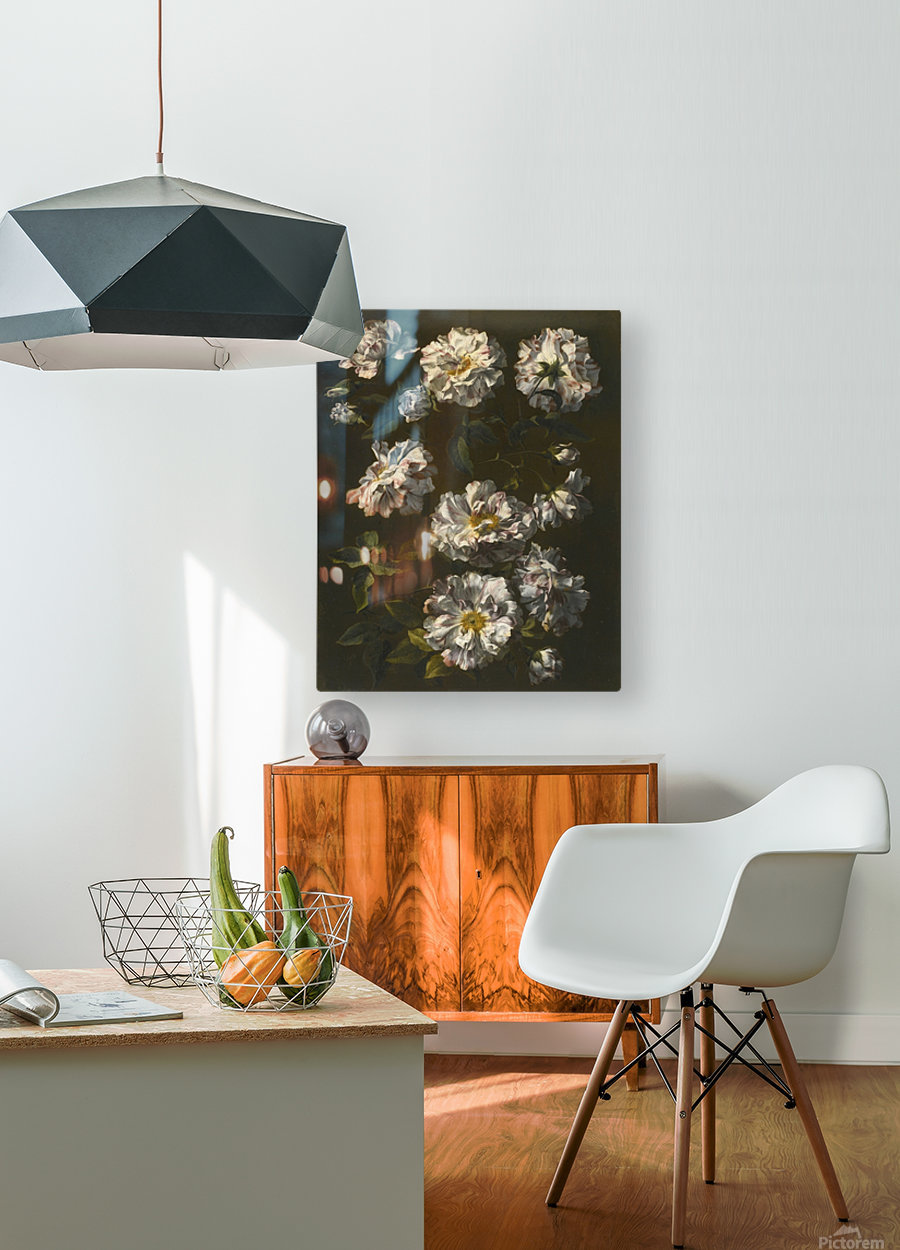 A study of striped white gallica roses  HD Metal print with Floating Frame on Back