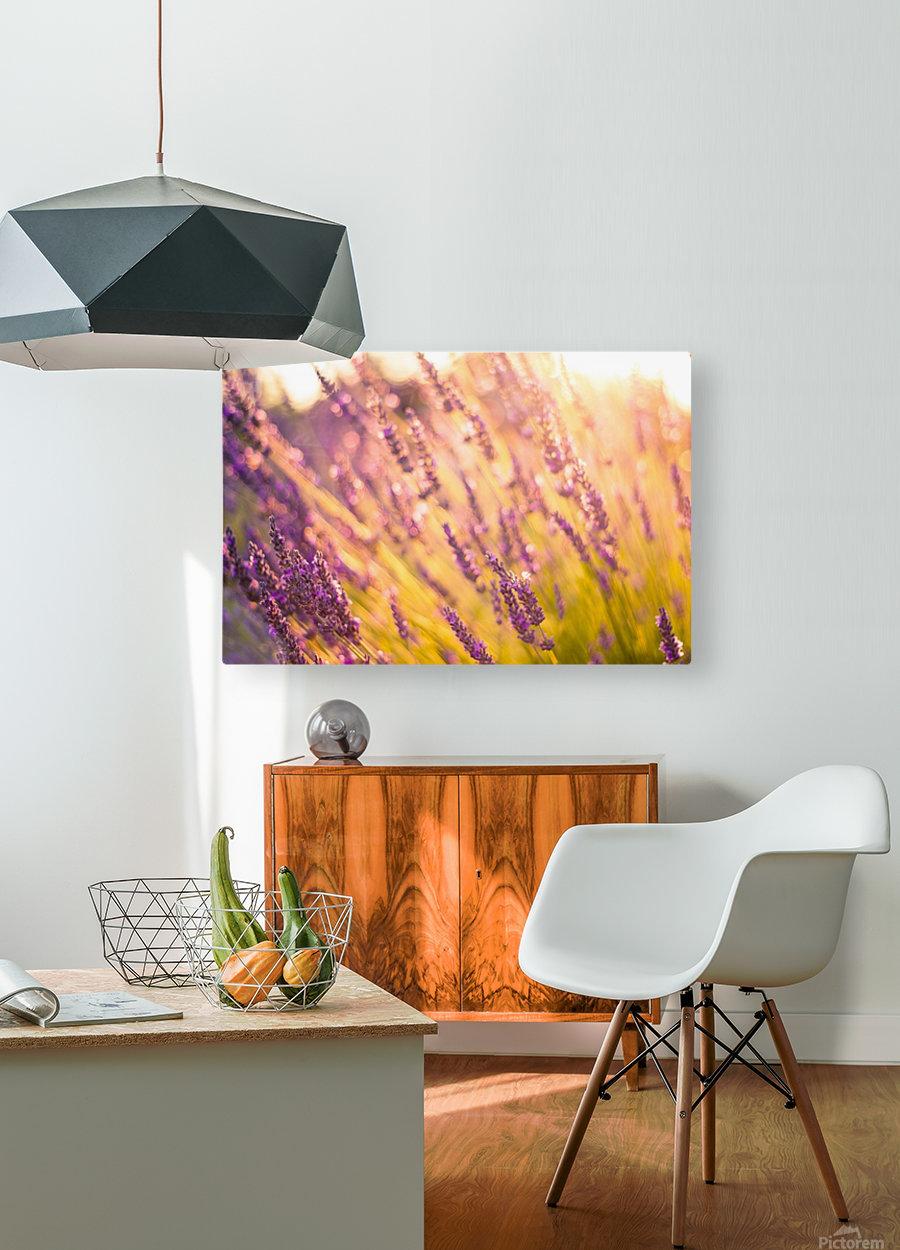 Sunset lavender flowers  HD Metal print with Floating Frame on Back