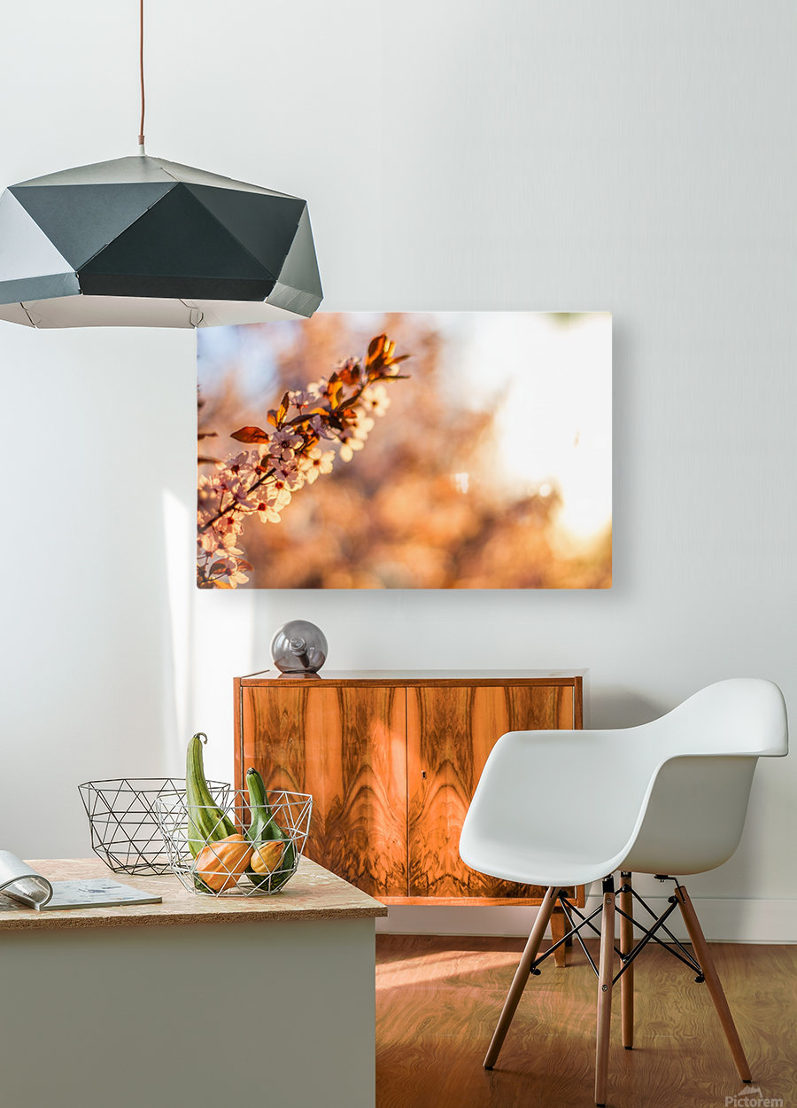 Beautiful Spring cherry flowers  HD Metal print with Floating Frame on Back