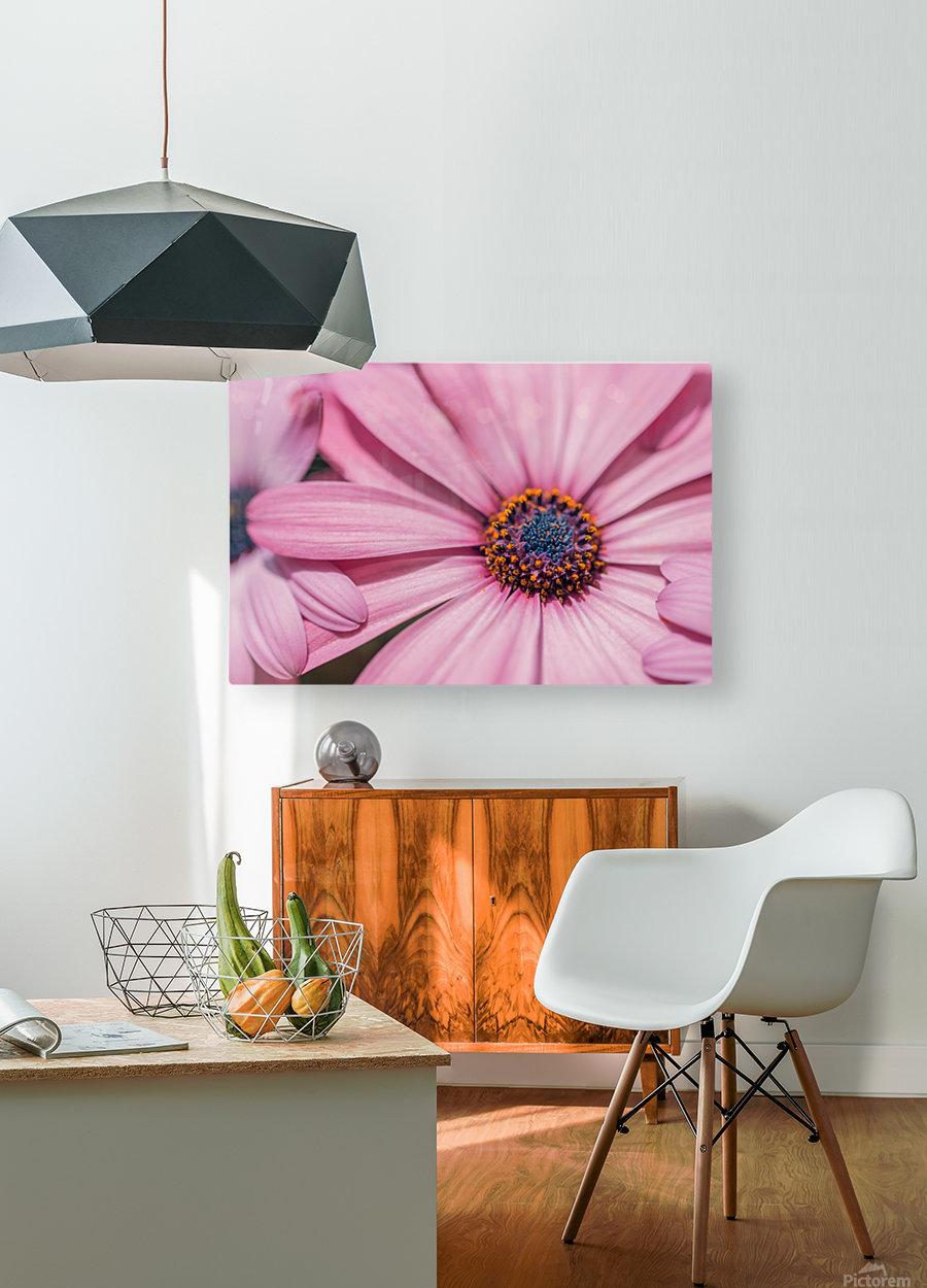 Gerbera flower background  HD Metal print with Floating Frame on Back