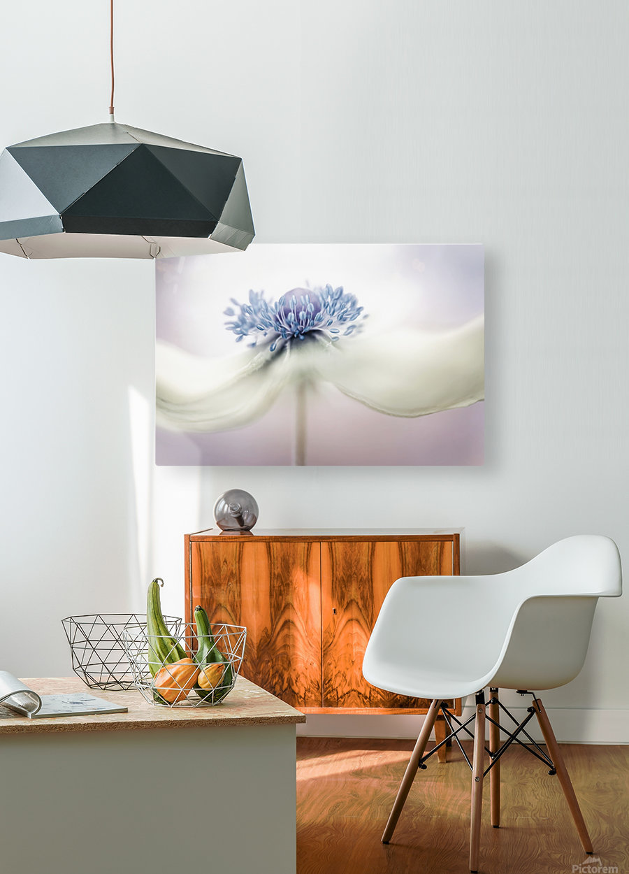 Anemone  HD Metal print with Floating Frame on Back