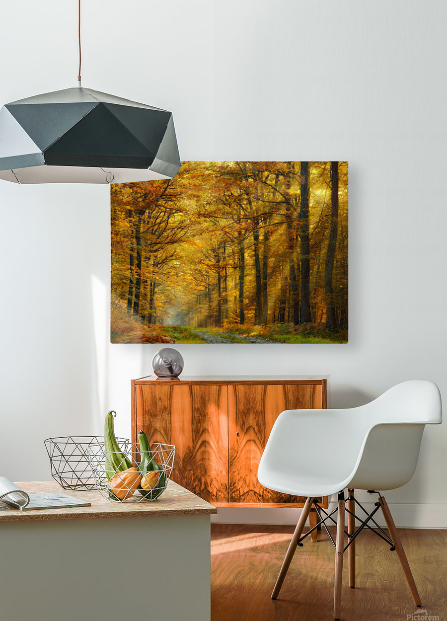 Enchanted Forest  HD Metal print with Floating Frame on Back