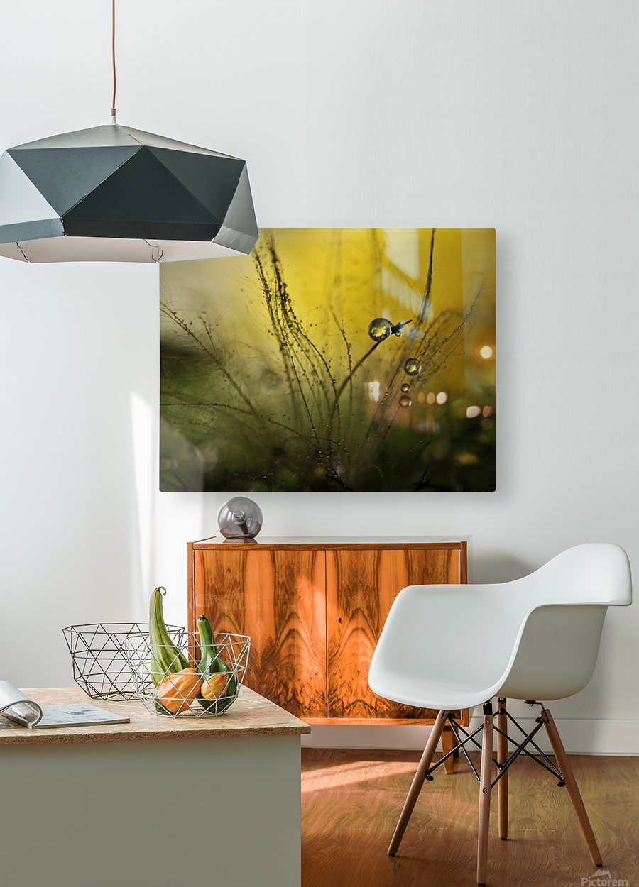 A golden morning shower  HD Metal print with Floating Frame on Back