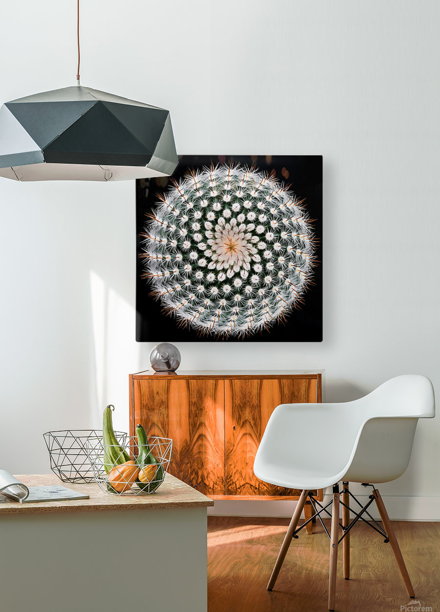 Notocactus scopa  HD Metal print with Floating Frame on Back