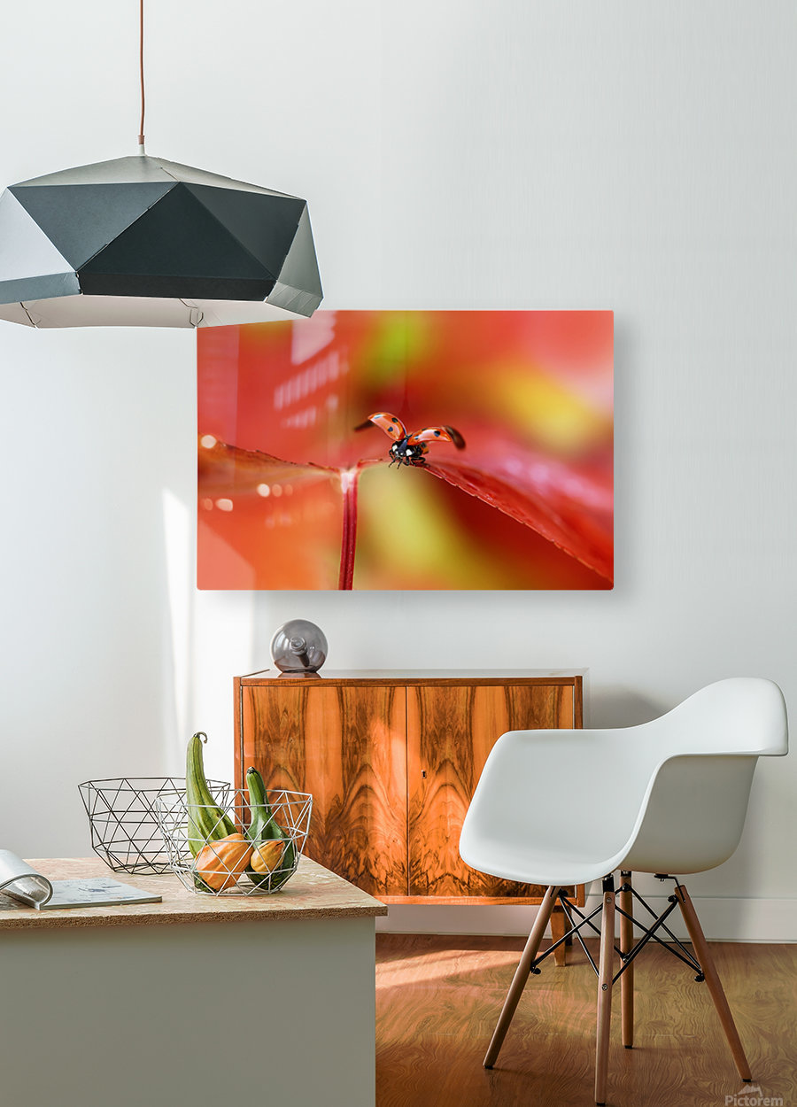 Ladybird in autumn  HD Metal print with Floating Frame on Back