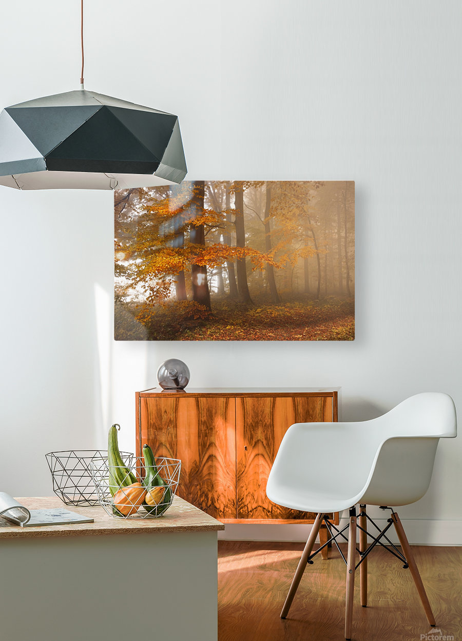 Edge of the woods  HD Metal print with Floating Frame on Back