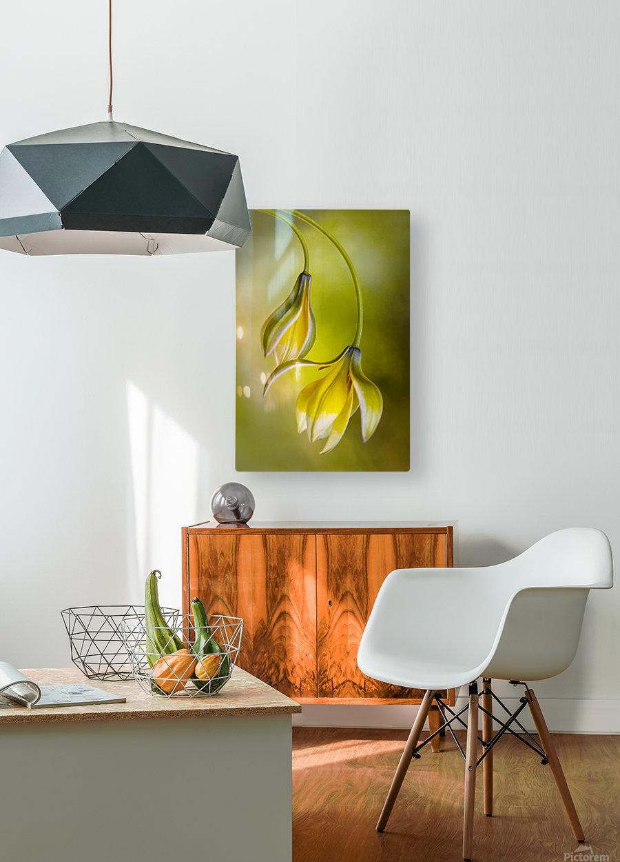 Tulipa  HD Metal print with Floating Frame on Back