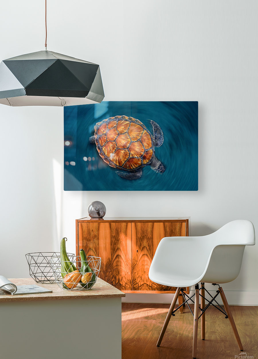 spin turtle  HD Metal print with Floating Frame on Back
