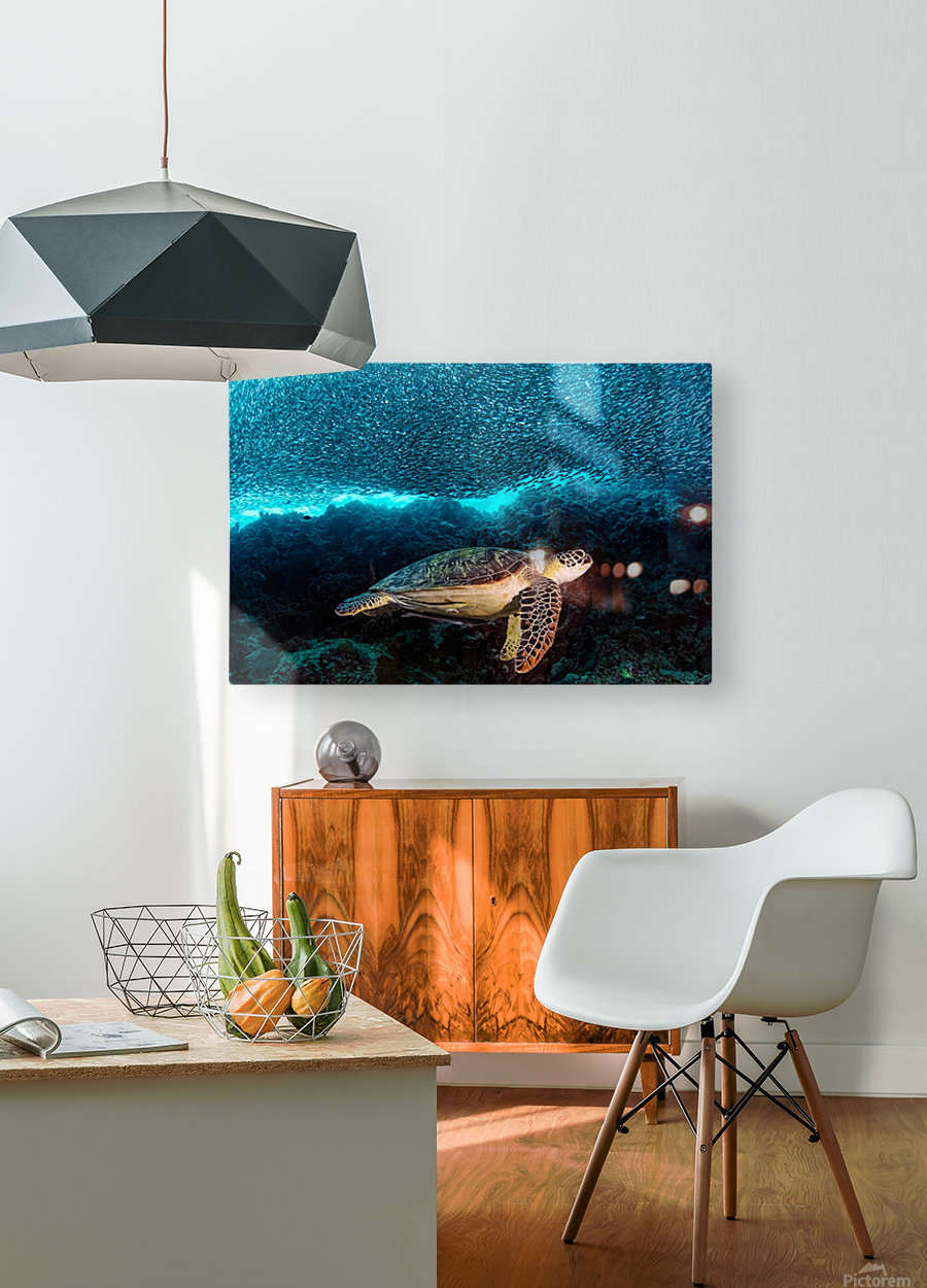 Turtle and Sardines  HD Metal print with Floating Frame on Back