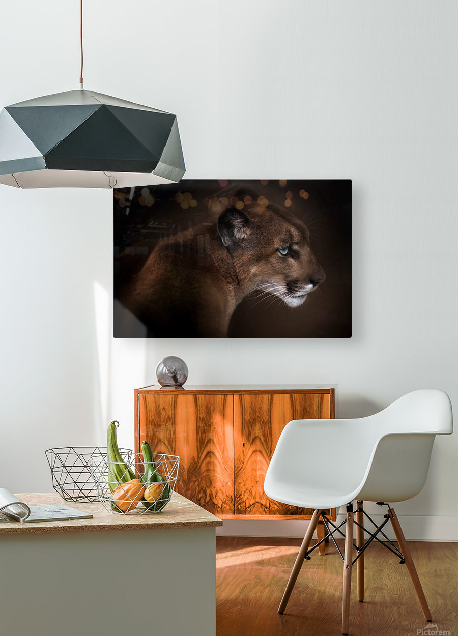Puma  HD Metal print with Floating Frame on Back