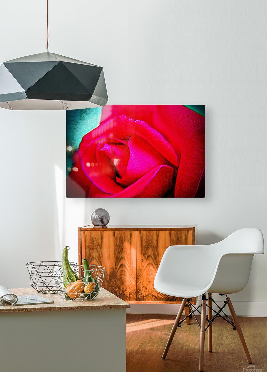 Pink Rose  HD Metal print with Floating Frame on Back