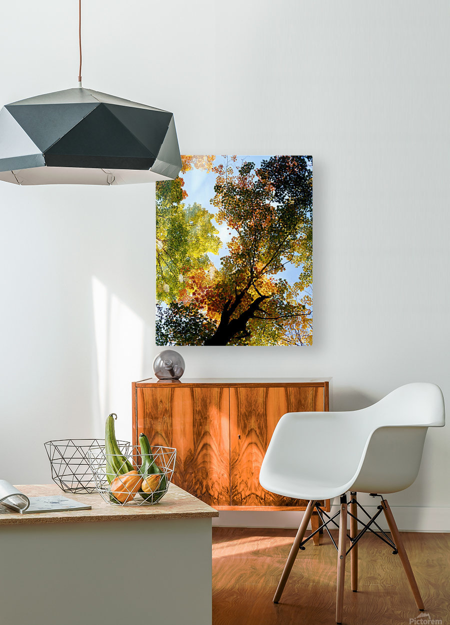 Autumn Trees Low-Angle  HD Metal print with Floating Frame on Back