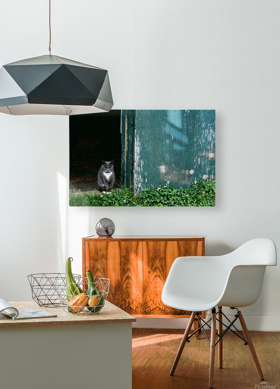 Cat In A Doorway  HD Metal print with Floating Frame on Back