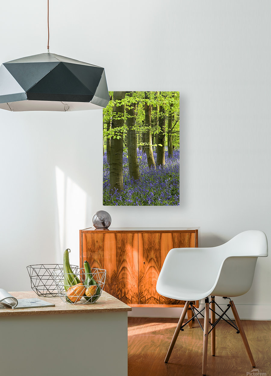 Bluebells In The Woods, Nottinghamshire, England  HD Metal print with Floating Frame on Back