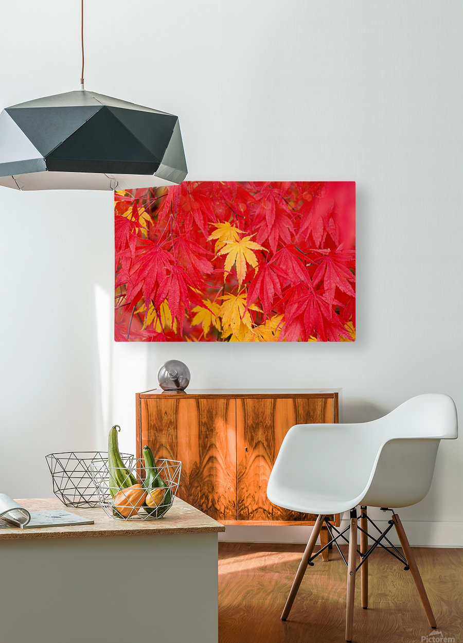 Close-Up Fall Leaves  HD Metal print with Floating Frame on Back