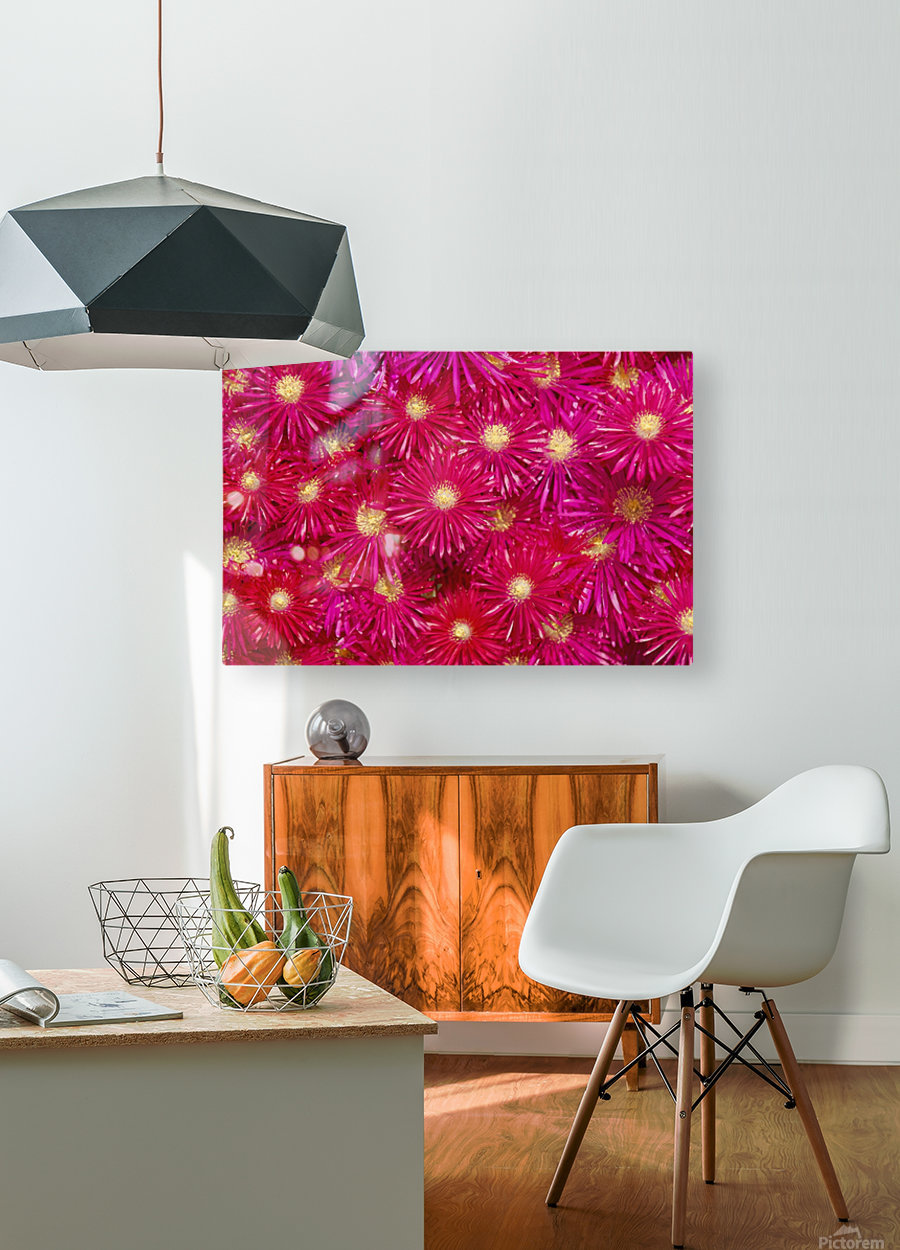 Trailing Ice Plant (Lampranthus Spectabilis)  HD Metal print with Floating Frame on Back