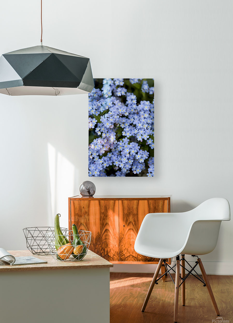 Victoria, British Columbia, Canada; Blooming Blue Flowers  HD Metal print with Floating Frame on Back