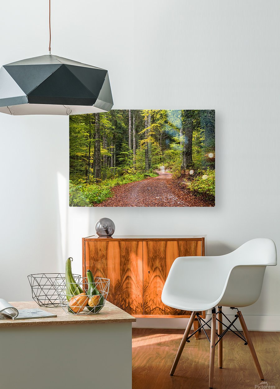Fall Forest  HD Metal print with Floating Frame on Back