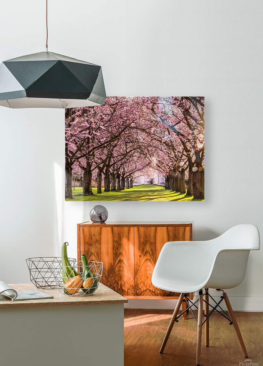 Cherry Blossom in a Park  HD Metal print with Floating Frame on Back